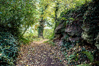 Sampford Brett Walk EM -  Nov 2016-3881