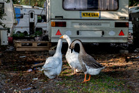 Travellers Camp Haldon Hill Exeter 2014 011
