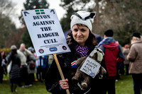 Exeter's March against the Badger Cull