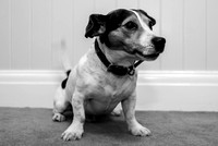 Oliver Dog Audition Minehead 2017-5385