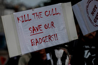 Exeter_march_ against_the_badger_cull 040